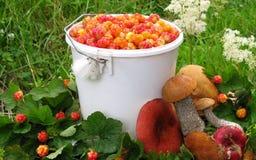 jagodowy szalunek Obrazy Royalty Free