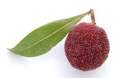 jagodowy wosk Zdjęcia Royalty Free
