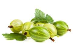 Jagody agrestowy zbliżenie Dojrzałe soczyste słodkie jagody z zielonym liściem Zdjęcie Royalty Free