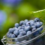 jagody błękitny Obrazy Royalty Free