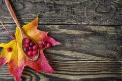 Jagody cranberries i drewniana łyżka na liściu klonowym Obraz Royalty Free