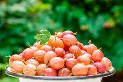 Jagody czerwony agrest na zamazanym zielonym tle Fotografia Royalty Free