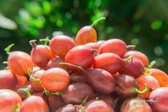 Jagody czerwony agrest na zamazanym zielonym tle Zdjęcia Royalty Free