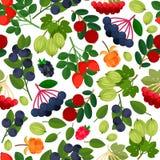 jagody deseniują bezszwowego Obraz Stock