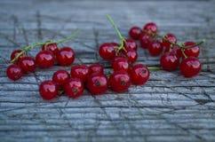 jagody dojrzały porzeczkowy czerwony Zdjęcia Royalty Free
