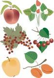 jagody fruit ilustracyjny soczysty lato Obrazy Royalty Free
