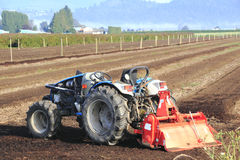 Jagody gospodarstwo rolne Do i Przygotowywa wyposażenie Zdjęcie Royalty Free