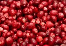 jagody grupują czerwień Fotografia Royalty Free