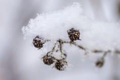 Jagody i krótkopędy pod śniegiem, lód, śnieg zdjęcie stock
