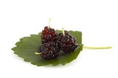 jagody mulberry 3 Zdjęcie Stock