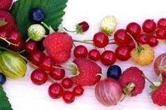 Jagody na lekkim tle: malinki, agresty, czernicy, truskawki, czerwoni rodzynki Obrazy Stock