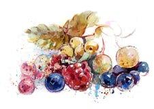 Jagody na stołowym (truskawki, malinki, czarne jagody, rodzynki,) Zdjęcie Royalty Free