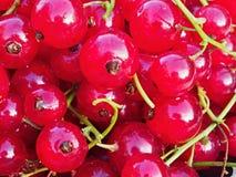 jagody nadal życia porzeczkowa czerwony Zdjęcia Stock