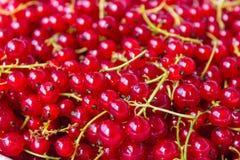 jagody nadal życia porzeczkowa czerwony Fotografia Royalty Free