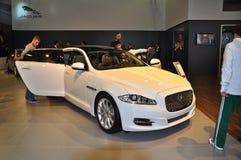 Jaguar é um modelo muito especial fotos de stock