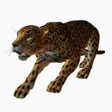 jaguar Vektor Illustrationer