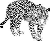 jaguar Stock Afbeeldingen
