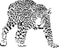 jaguar Obrazy Stock