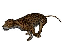 Jaguar. 3D rendered jaguar on white background isolated Stock Image