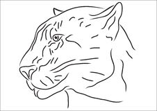 Jaguar. Draw in white background stock illustration