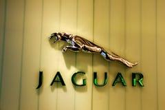Jaguar Fotografía de archivo libre de regalías