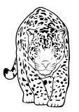 Jaguar lizenzfreie abbildung
