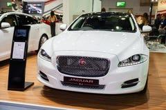 jaguar Royaltyfri Fotografi