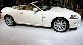 Jaguar Royalty-vrije Stock Foto's