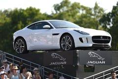 jaguar Immagini Stock