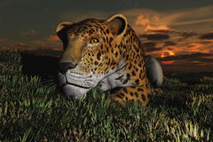 Jaguar. Computer Generated Image Of A Jaguar Lying On Floor During Sunset Stock Photography