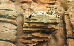 jaguar Fotografia de Stock