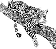 Free Jaguar Royalty Free Stock Image - 93916366