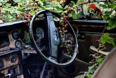 Jaguar abandonné photographie stock libre de droits