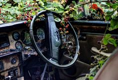 Jaguar abbandonato Fotografia Stock Libera da Diritti