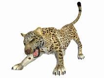 Jaguar agresivo Imágenes de archivo libres de regalías