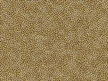 Jaguar animal de texture de fourrure Photo libre de droits