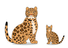 Jaguar and bengal cat Royalty Free Stock Photos