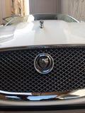Jaguar bil arkivfoton