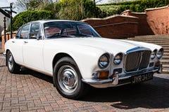 Jaguar branco Foto de Stock Royalty Free