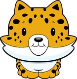 Jaguar Cub do bebê Imagem de Stock