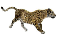 Jaguar. 3D digital render of a trotting jaguar isolated on white background Royalty Free Stock Photography