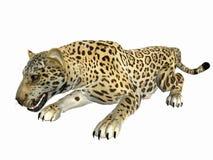 Jaguar de agachamento fotos de stock