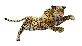 Jaguar die, wild die dier springen op wit wordt geïsoleerd royalty-vrije stock afbeelding