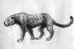 Jaguar - drawing Royalty Free Stock Images