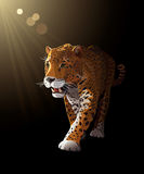 Jaguar en la oscuridad, claro de luna - vector Fotografía de archivo libre de regalías