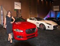 Jaguar Exhibit Stock Photos