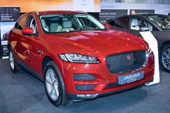 Jaguar-F-Tempo royalty-vrije stock fotografie