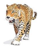 Jaguar - geïsoleerdeg vector, schaduw Royalty-vrije Stock Fotografie