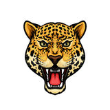 Jaguar Head Isolated Cartoon Mascot Design Royalty Free Stock Images