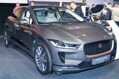 Jaguar-I-Tempo royalty-vrije stock afbeelding
